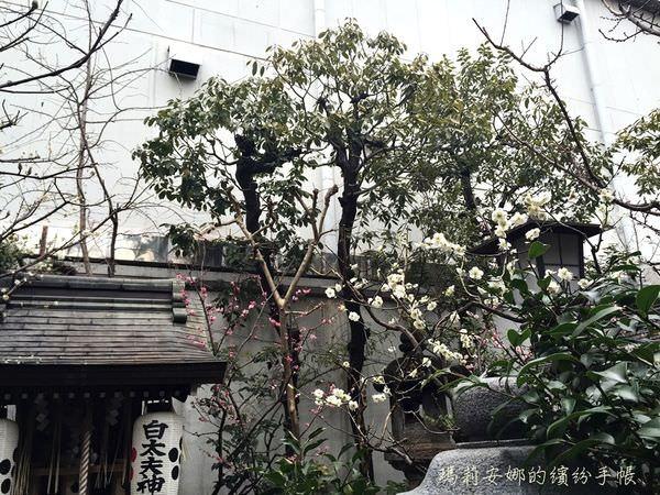 京都-錦天滿宮 (25).JPG